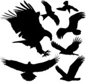 Birds of prey (eagle, hawk, falcon, griffon vulture etc.) vector silhouettes on white background. Layered. Fully editable — Stockvector