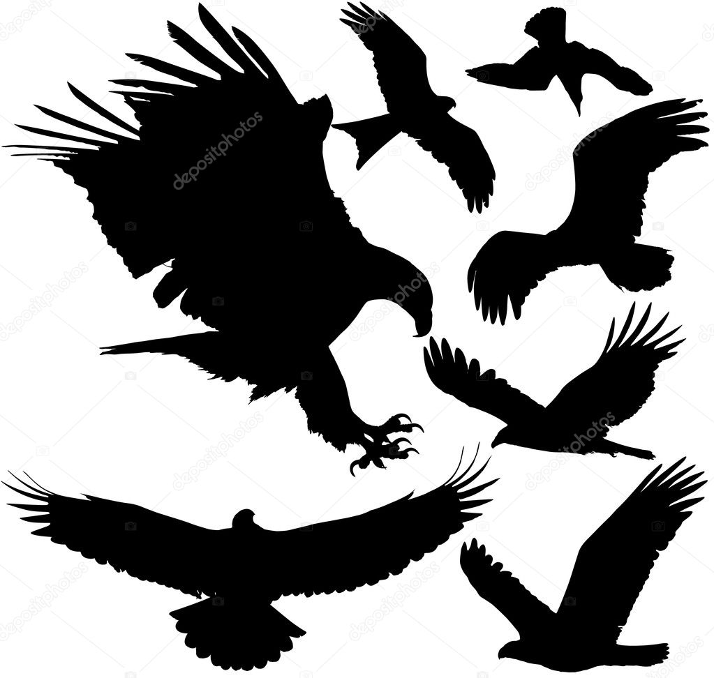 vector silhouettes on white Eagle Silhouette Vector