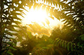 Green leaves on a sunrise background — Stock Photo