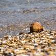 Seashell with sand was background and a small wave — Stock Photo