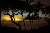 Sunset through the Trees — Stock Photo