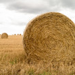 Royalty-Free Stock Photo: Hay Rolls in field