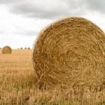 Hay Rolls in field — Stock Photo #12411054
