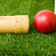 Backyard Croquet Game — Stock Photo