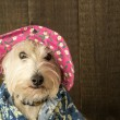 Stock Photo: Funny Dog wearing flower hat and Hawaiishirt
