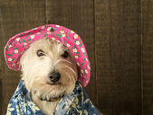 Funny Dog wearing flower hat and Hawaiian shirt — Stock Photo
