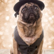 New Year's Eve Formal Party Dog — Stock Photo #12901274
