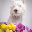 Cute white dog in the flower beds — Stock Photo