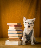 Back to School Dog — Stock Photo