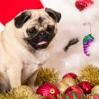 Christmas Dog — Foto de stock #15390969