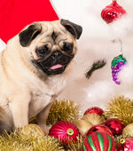 Christmas Dog — Stock fotografie