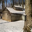 Maple sugar shack during the sugaring season - Stock Photo