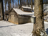 Maple sugar shack during the sugaring season — Stock Photo