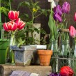 binnen de potting shed — Stockfoto