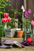 Inside the potting shed — Stock Photo