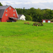 Idyllc Farm Panoramic — Stock Photo
