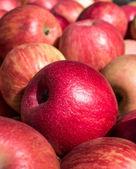 Ripe Honey Crisp Apples — Stock Photo