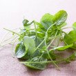 Fresh watercress leaves — Stock Photo #14349971