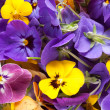 Stock Photo: Bunch of violet eatable flowers