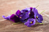 Pile of violet eatable flowers — Stock Photo