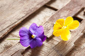 Couple of violet eatable flowers — Stock Photo