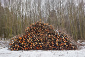 Log stack on forest — Stock Photo