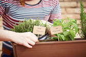 Thyme and sage plants on urban garden — Stock Photo
