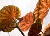 осенний сад — Стоковое фото