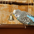 Parrot at the outlet of the cell — Stock Photo