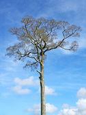 Big tree, blue sky — Zdjęcie stockowe