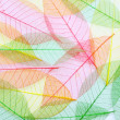 Colored Skeleton leafs seamless abstract background — Stock Photo