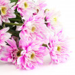 Closeup of chrysanthemum — Stock Photo #13210925