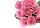 Bright pink roses — Stock Photo