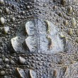 Crocodile skin closeup, useful for background or texture — Stok fotoğraf
