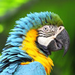 Colorful macaw — Stock Photo #13265514