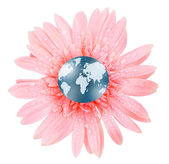 3D globe in gerbera — Stockfoto