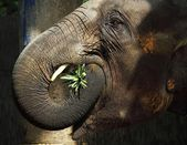 Thailand elephant — Stock Photo