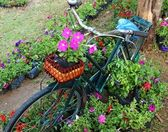 Old bicycle with flowers in the front basket,parked in the garde — Stock Photo