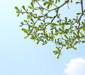 空を背景の葉 — ストック写真