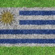 Flag Uruguay as a painting on green grass — Stock Photo