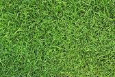 新鮮な春の緑の草のクローズ アップ画像 — ストック写真