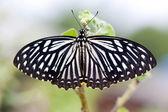 树上的蝴蝶 — 图库照片