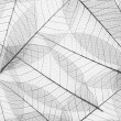Skeleton leaf background — Stockfoto