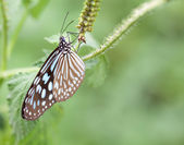 Butterfly on a leaves — Stock Photo