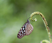 Butterfly on a leave — Stock Photo