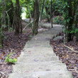 Stock Photo: Stairway in jungle