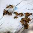 Honey bees on beehive — Stock Photo