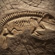 Model Dinosaur fossil — Foto Stock