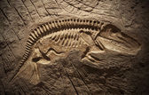Model Dinosaur fossil — Stock Photo
