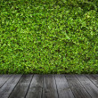 Green leaves wall and old wood floor for background — Stock Photo #14225551